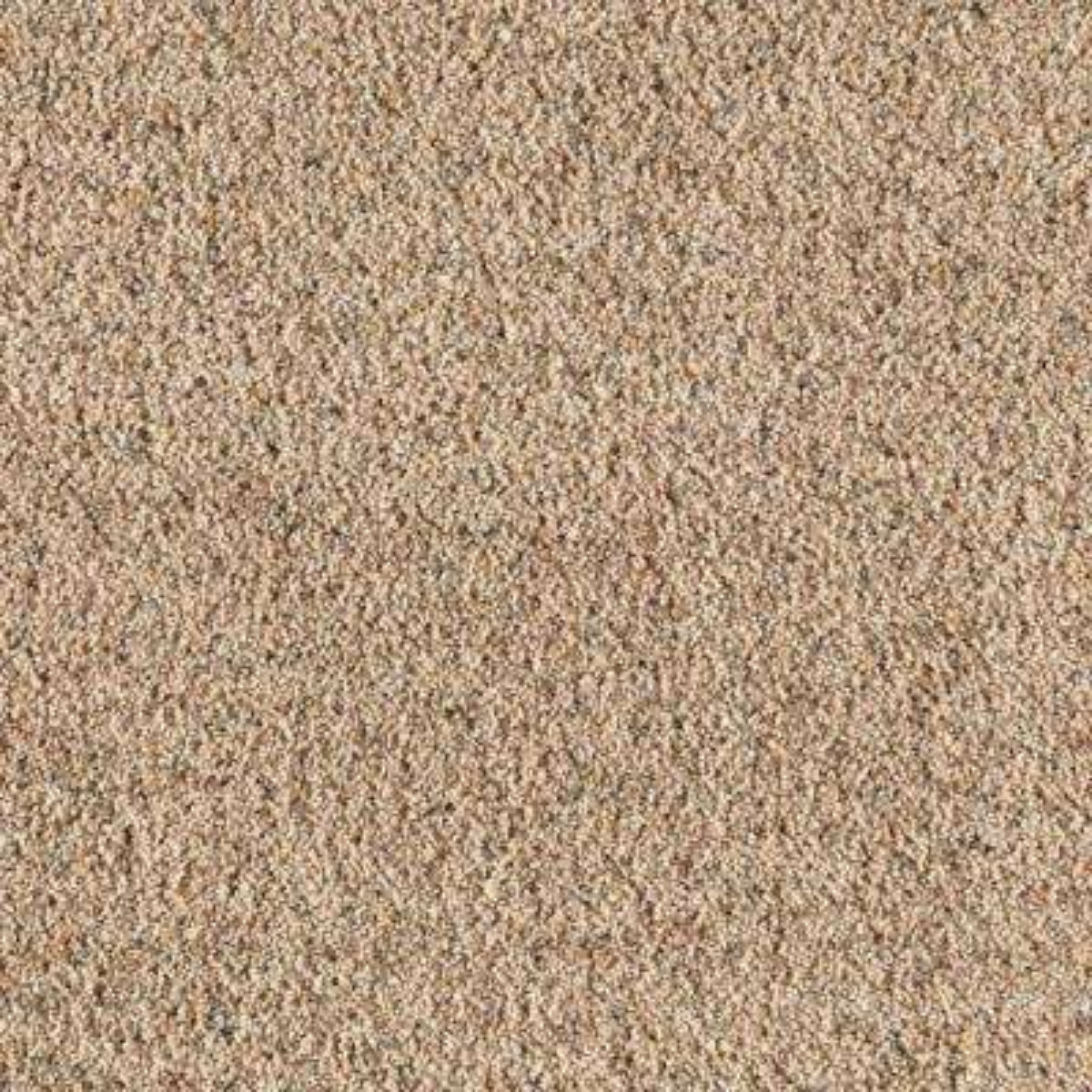 Carpet Sample - Old Ivy II - Color Nutria Texture 8 in. x 8 in.
