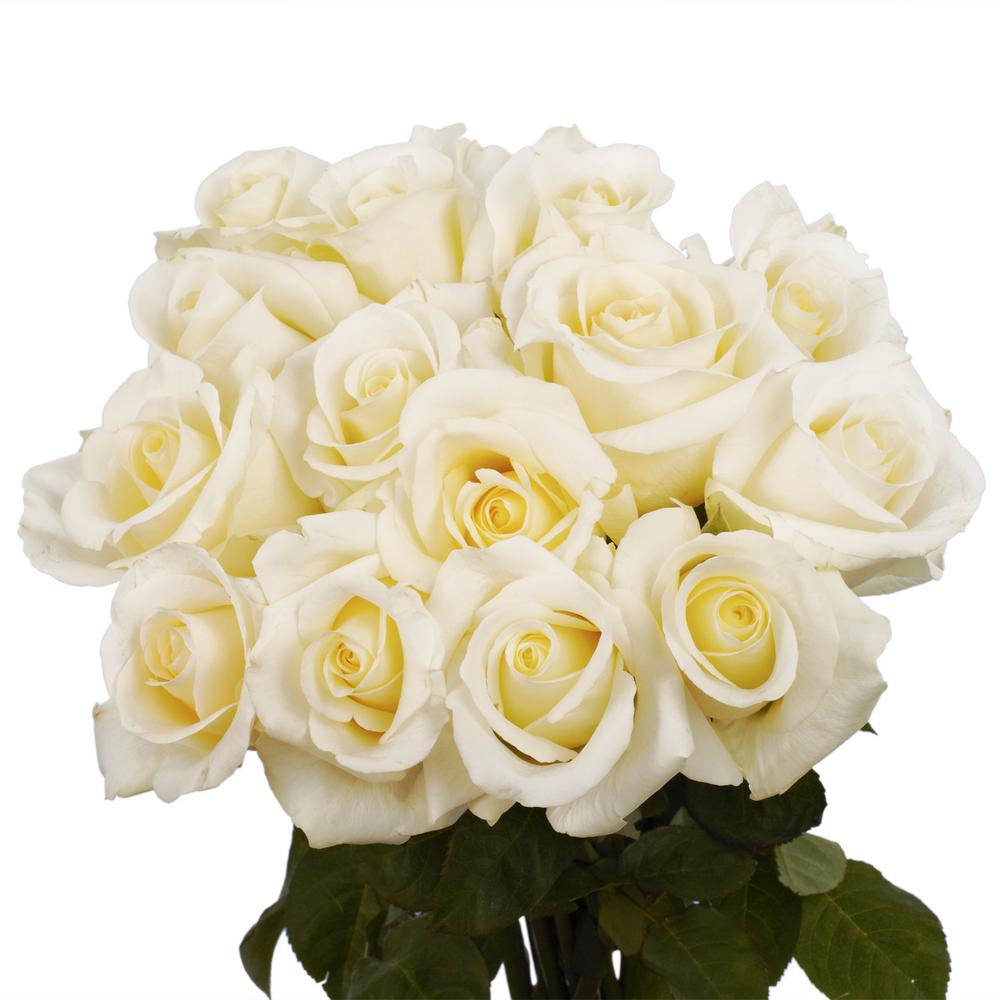 Globalrose Fresh White Roses Valentine\'s Day Flowers (100 Stems)-100 ...
