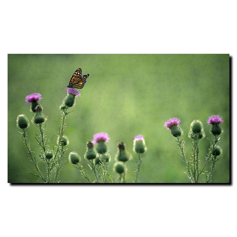 Trademark Fine Art 18 in. x 24 in. Monarch Thistles Canvas Art
