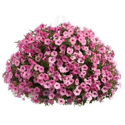 DIY Premium Hanging Basket Kit Supertunia Vista Bubblegum with 15 in. Container