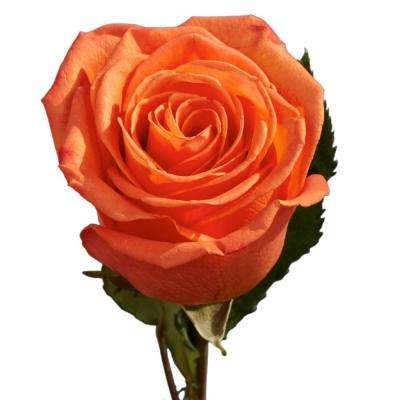 Orange Rose Flower Bouquets Garden Plants Flowers The Home