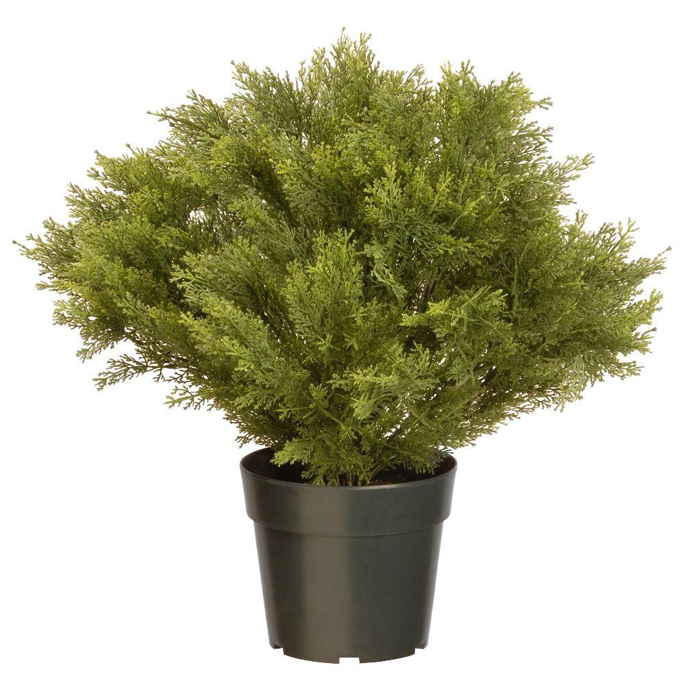 24 in. Globe Juniper with Green Pot