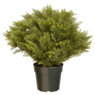24 in. Globe Juniper with Green Pot