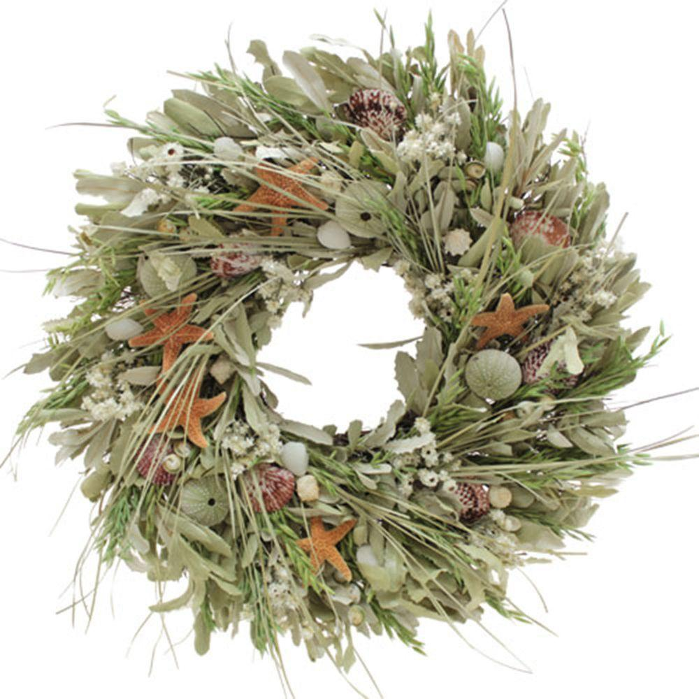 The Christmas Tree Company Shells by the Seashore 22 in. Seashell and Dried Floral Wreath