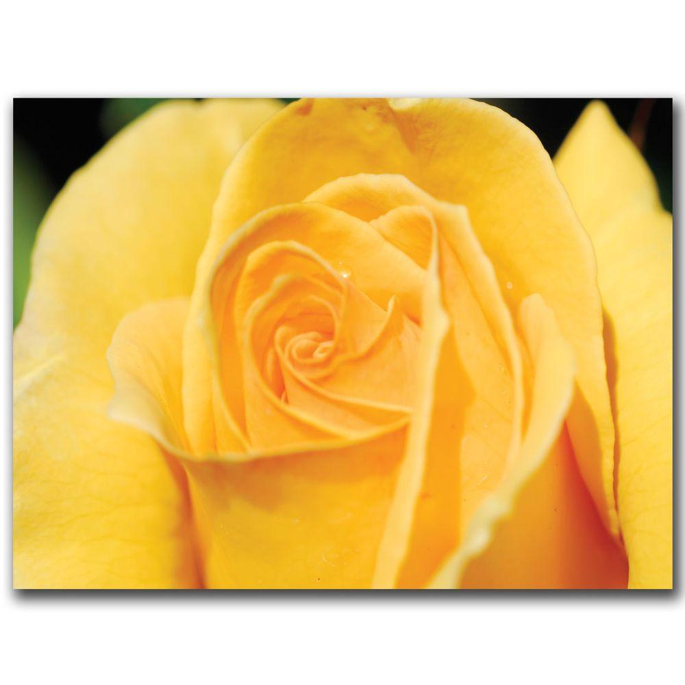 Trademark Fine Art 18 in. x 24 in. Yellow Rose Close Up Canvas Art