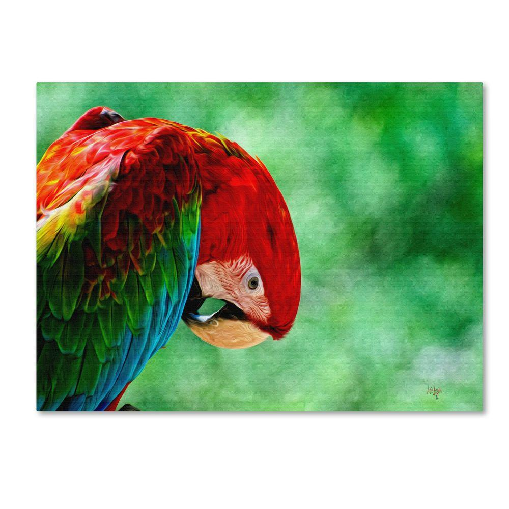 Trademark Fine Art 30 in. x 47 in. Colorful Macaw Canvas Art