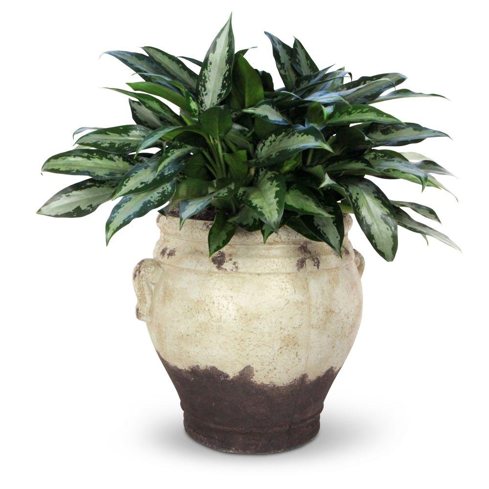 Pennington 17 In Fiberglass Paper Mache Greek Planter 100511892