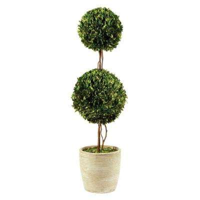 52 in. Preserved Boxwoods Topiary