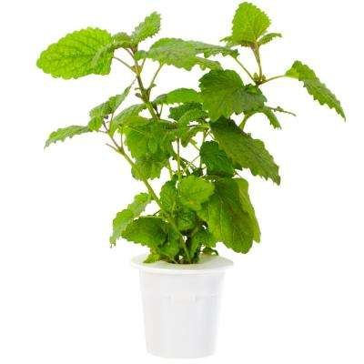 Lemon Balm Refill for Smart Herb Garden (3-Pack)
