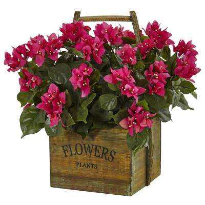 Indoor Bougainvillea Flowering Plant in Rustic Wood Planter