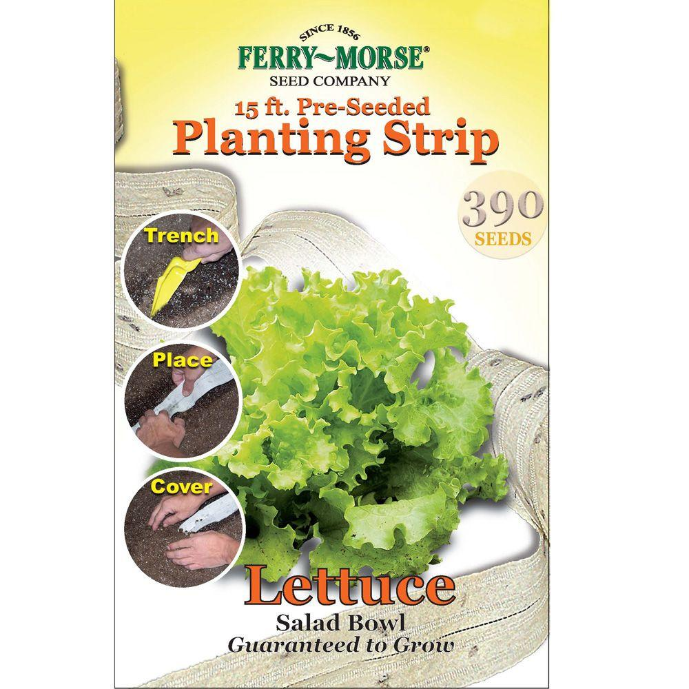 Ferry Morse 15 Ft Lettuce Salad Bowl Seed Strip 812 The Home Depot