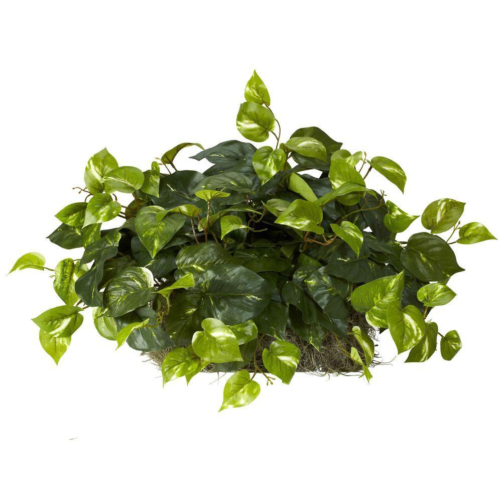 15 in. H Green Pothos Ledge Plant (Set on Foam) Silk Plant
