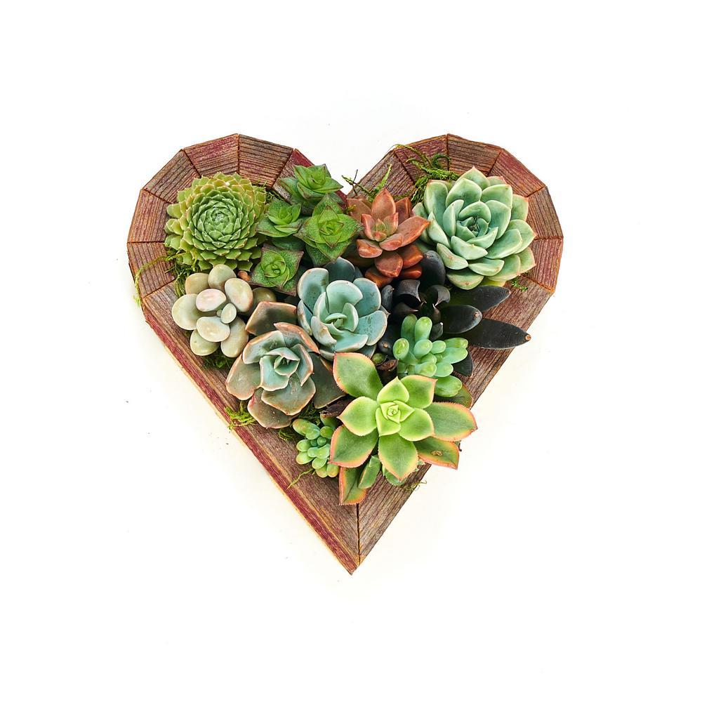 Vertical Garden Heart Small Succulent Planter