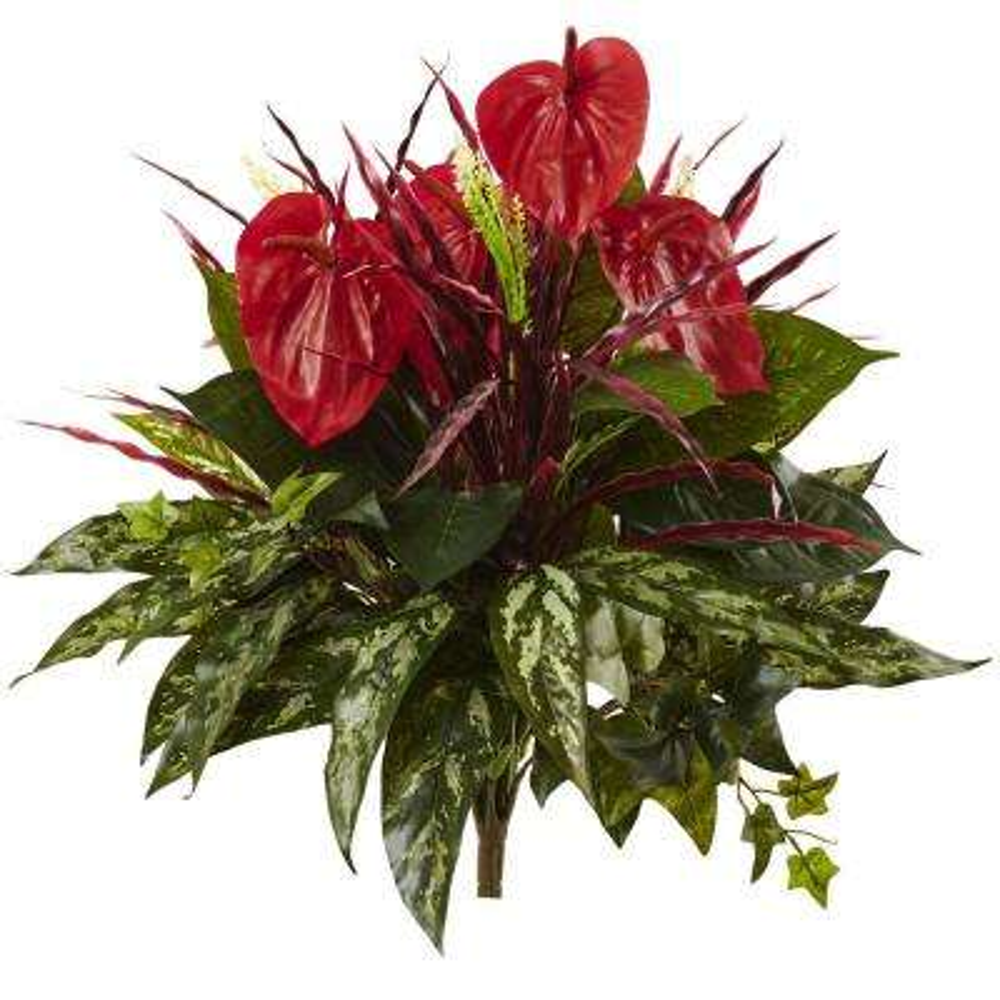 24 in. Mixed Anthurium Bush (Set of 2)