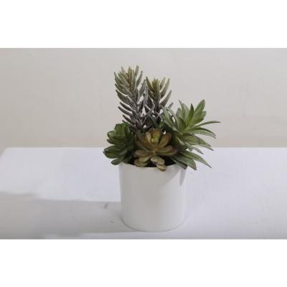 9.5 in. Assorted Succulent Arrangement in Plastic Pot Purple
