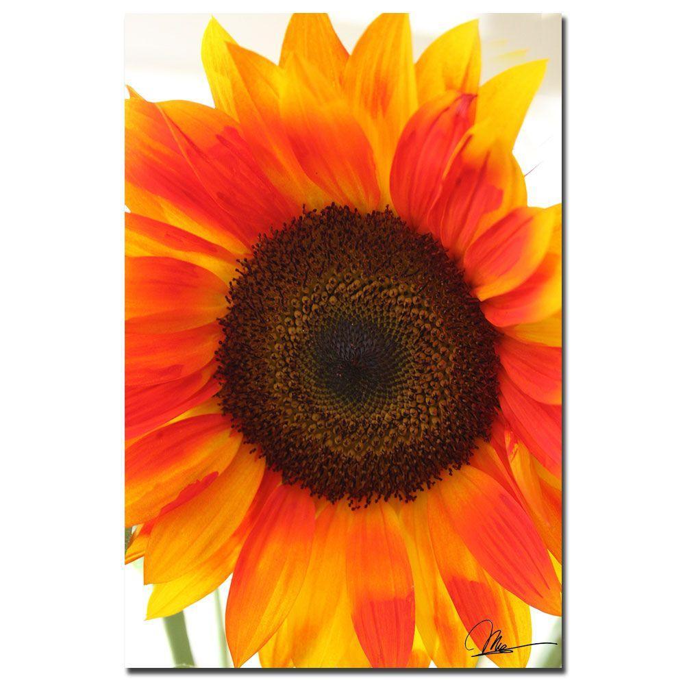 Trademark Fine Art 24 in. x 16 in. Sunflower V Canvas Art