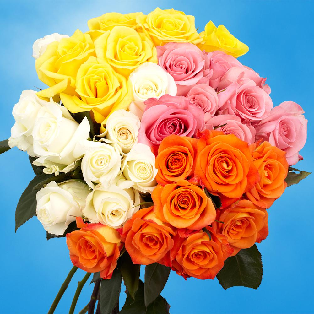 Globalrose Fresh Assorted Color Roses (50 Stems)
