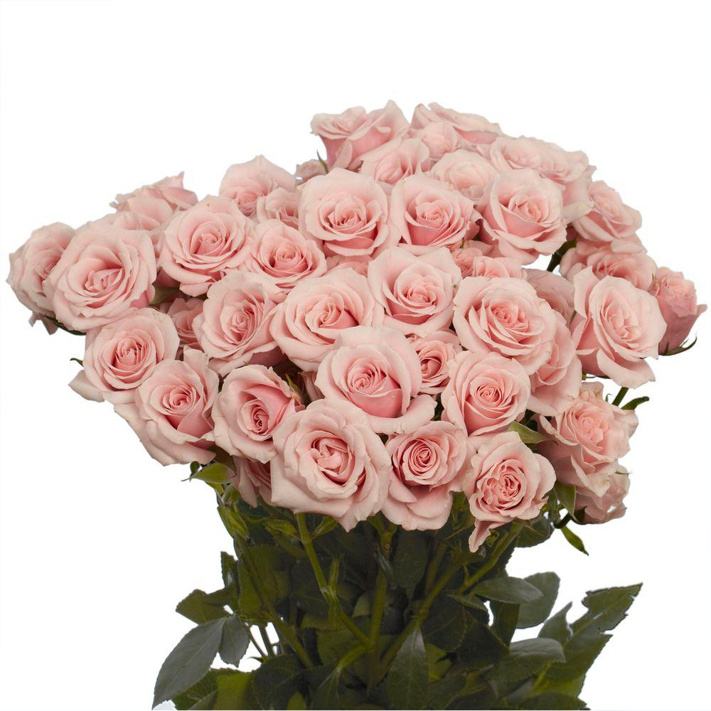 Globalrose Fresh Pink Spray Roses 100 Stems 350 Blooms Spray