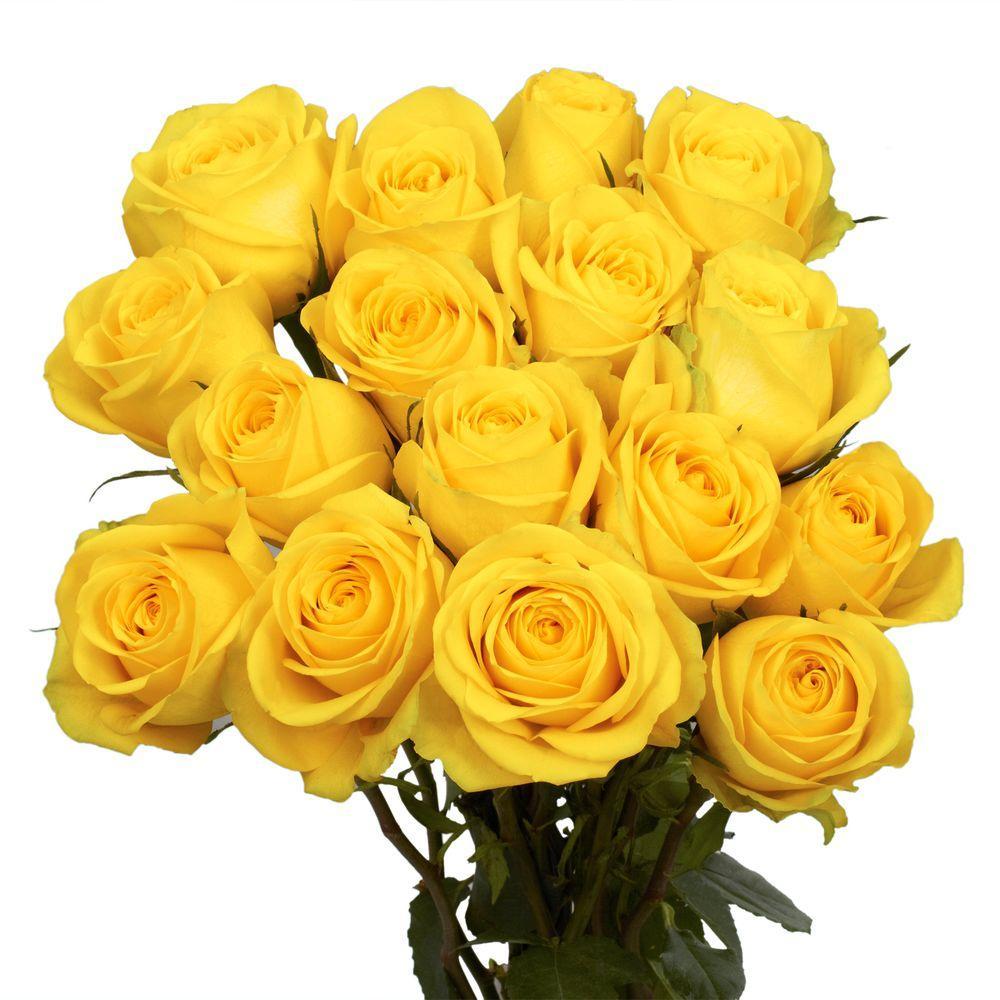 Fresh Yellow Roses (50 Stems)