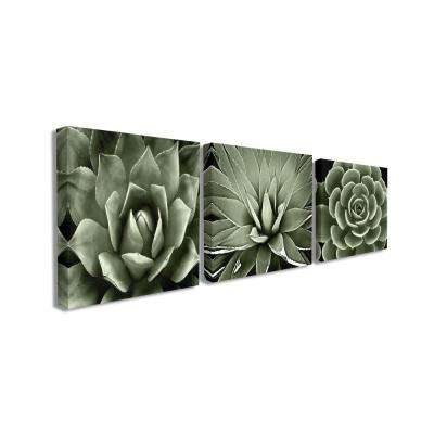 "17 in. x 17 in. ""Black and White Contrast Succulent Bloom Trio"" by Artist Mia Jensen Canvas Wall Art(3Pieces)"