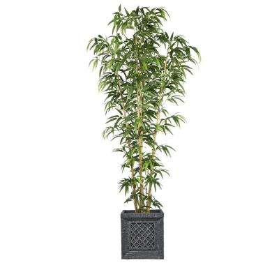 78 in. Bamboo Tree in Natural Poles in Planter