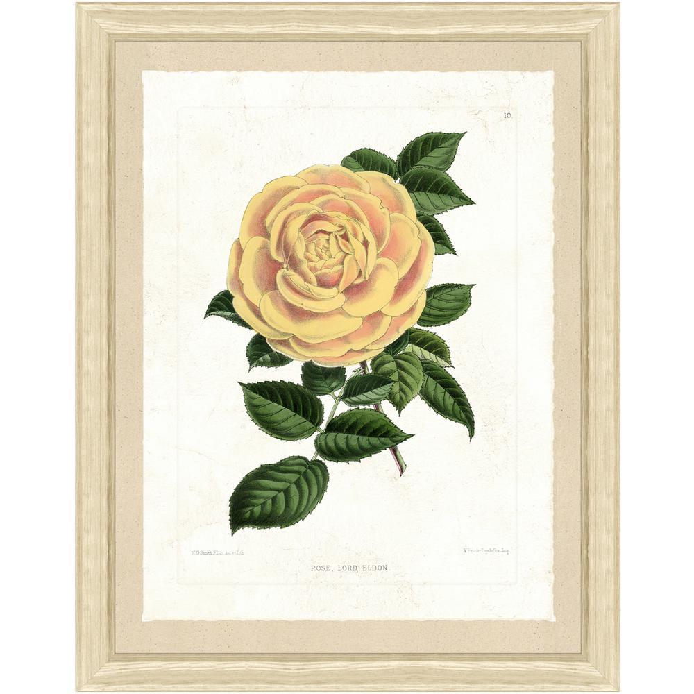 """""""Botanical V"""" Framed Archival Paper Wall Art (22x28)"""