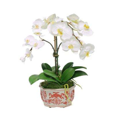 19 in. Orchid in Longlife Planter