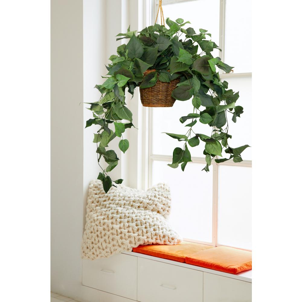 Lush and Green Hanging Pothos with Basket