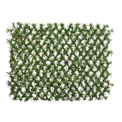 Indoor/Outdoor 39 in. Podocarpus Expandable Fence UV Resistant & Waterproof