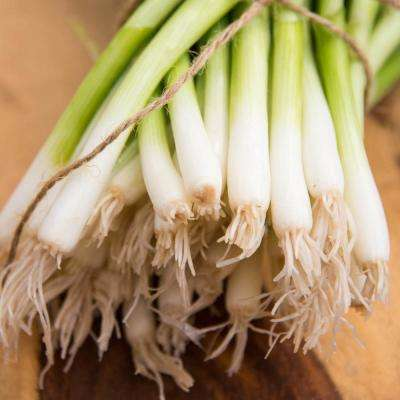 Onion Bunching EverGreen White Vegetable Seeds (250 Seed Packet)