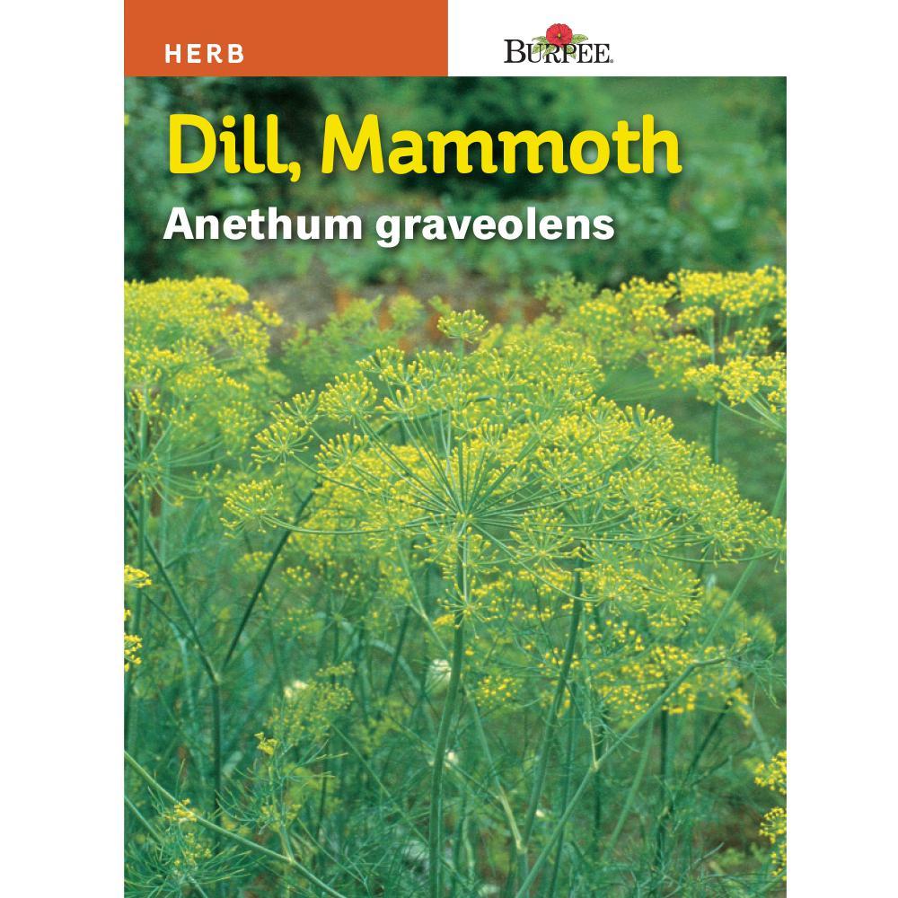 Dill Mammoth Seed