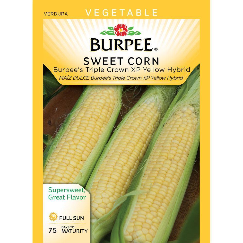 Burpee Corn, Yellow XP Hybrid WP Seed