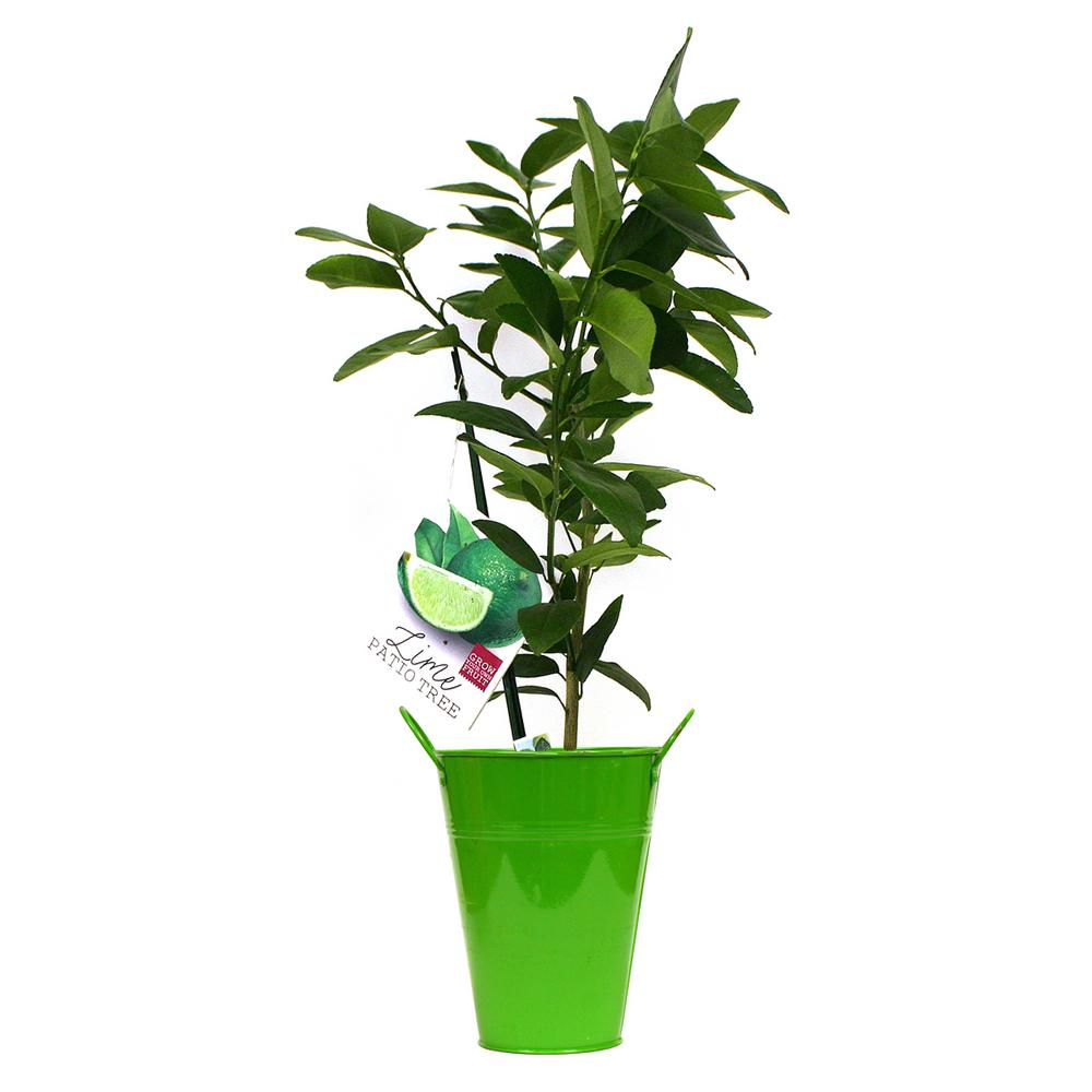 artificial evergreen tree bamboo decor at decorative direct