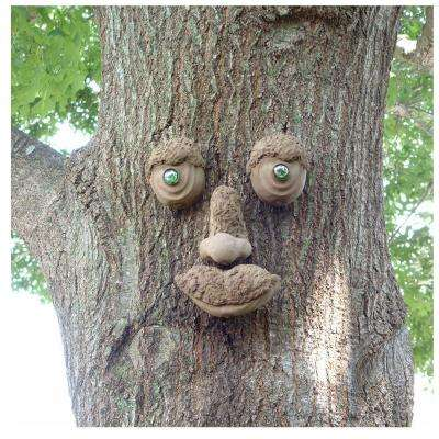 WoodChuck Tree Face