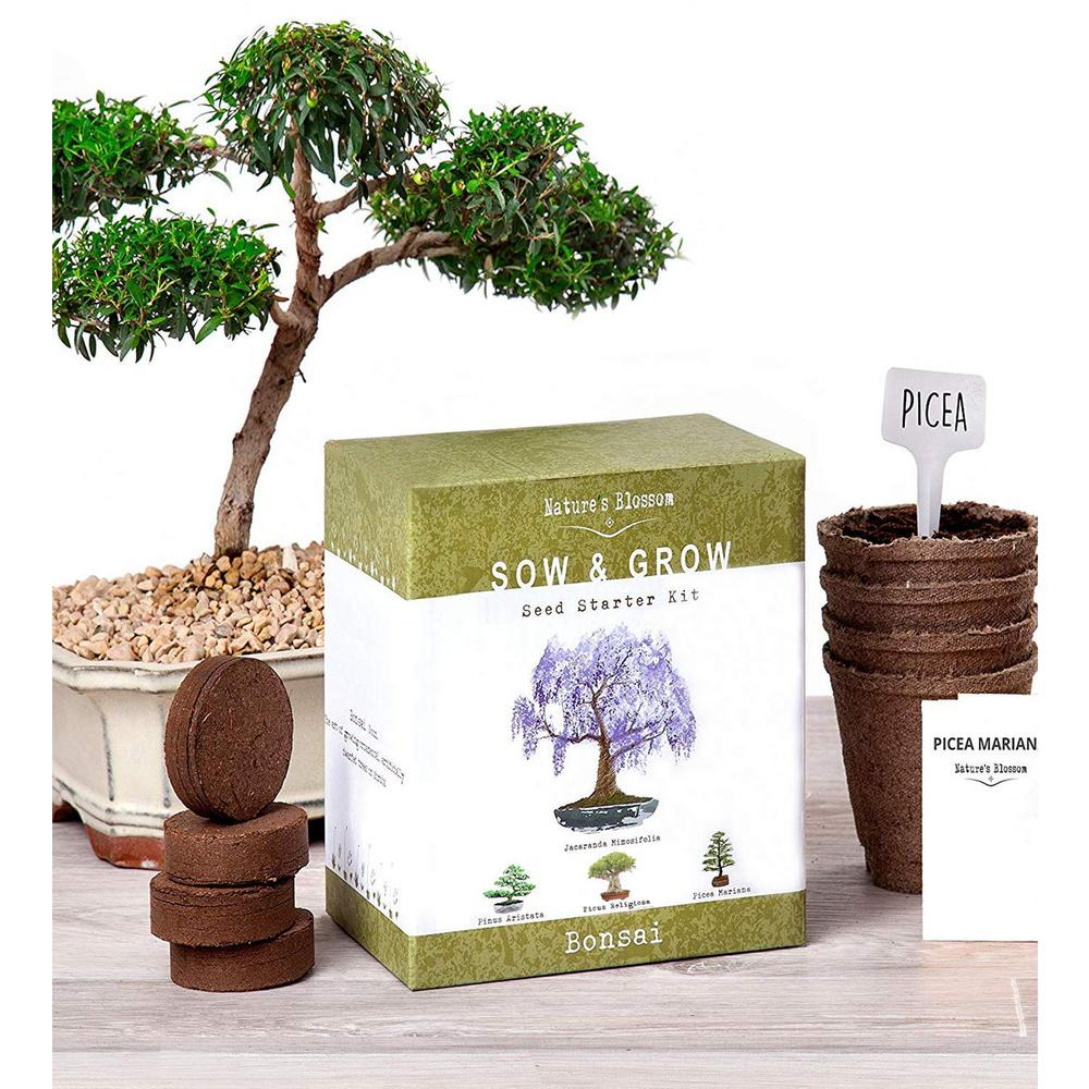 Bonsai Growing Kit. Grow 4 Types of Miniature Trees, Set with