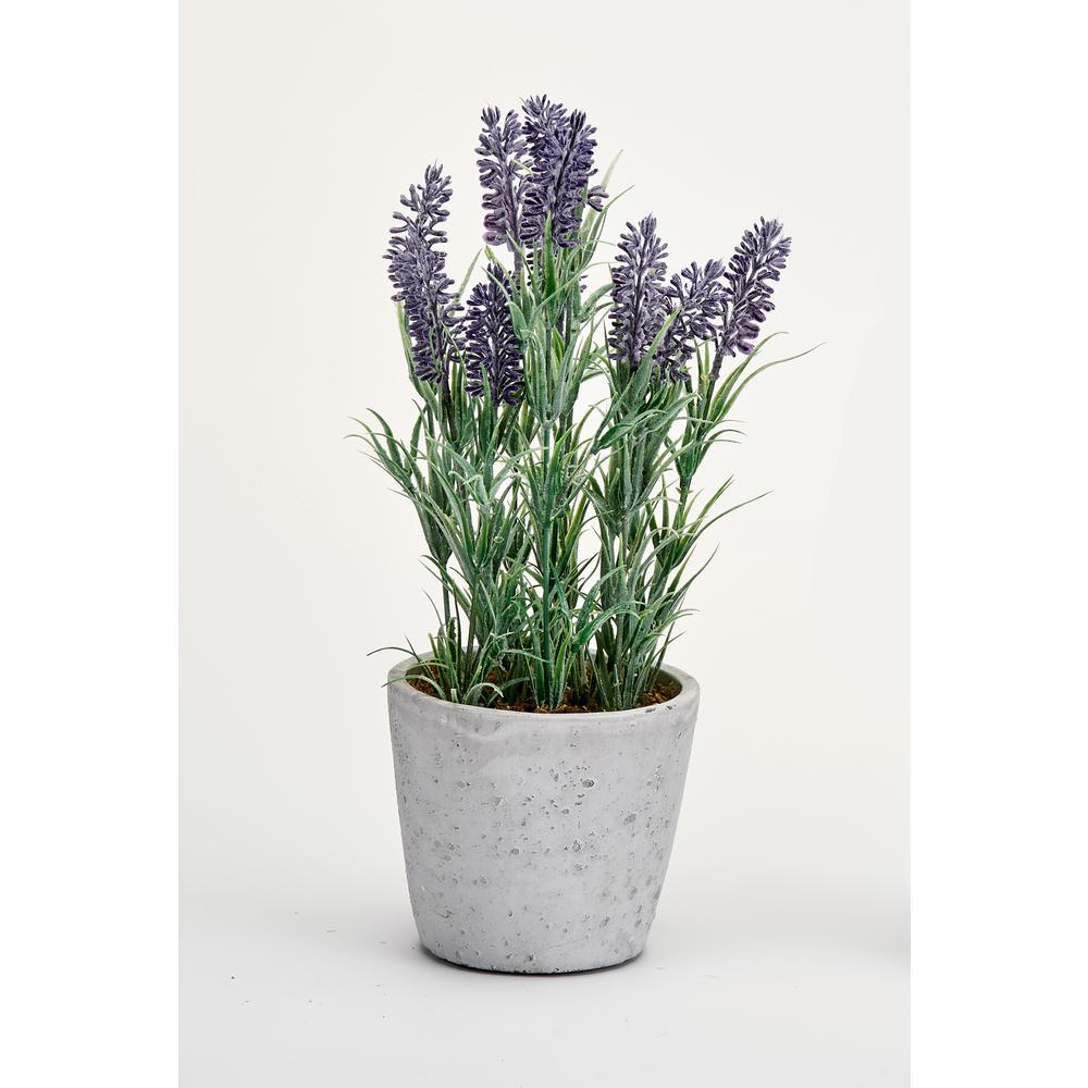 13 in. Lavender in Ceramic Pot