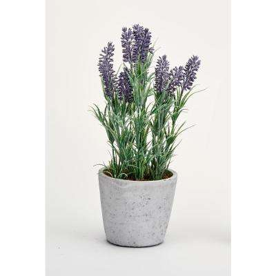 13 in. Lavender in Ceramic Pot