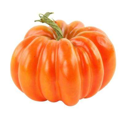 4.5 in. H x 6.5 in. W Harvest Traditional in Orange Pumpkin