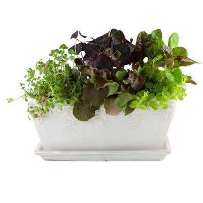 12 in. Ivy League Ceramic White Window Box Planter