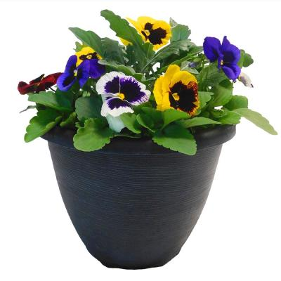 11 in. Pansy Annual Plant in Decorative Pot with Multi-Colored Blooms
