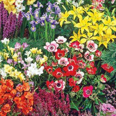 Border Summer Flowering Garden Bulbs (100-Pack)
