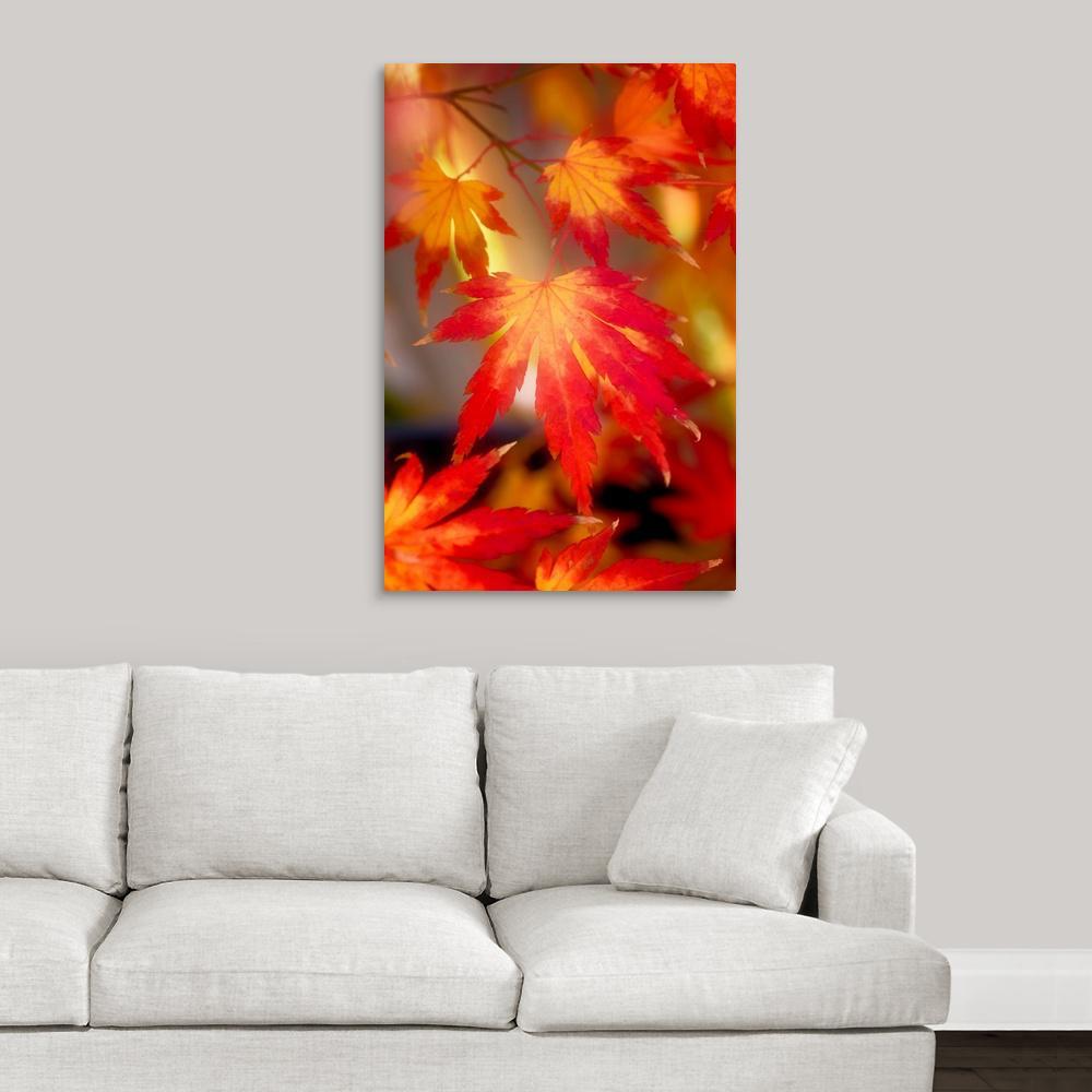 GreatBigCanvas ''Fall Back'' by Philippe Sainte-Laudy Canvas Wall Art 2477773_24_24x36