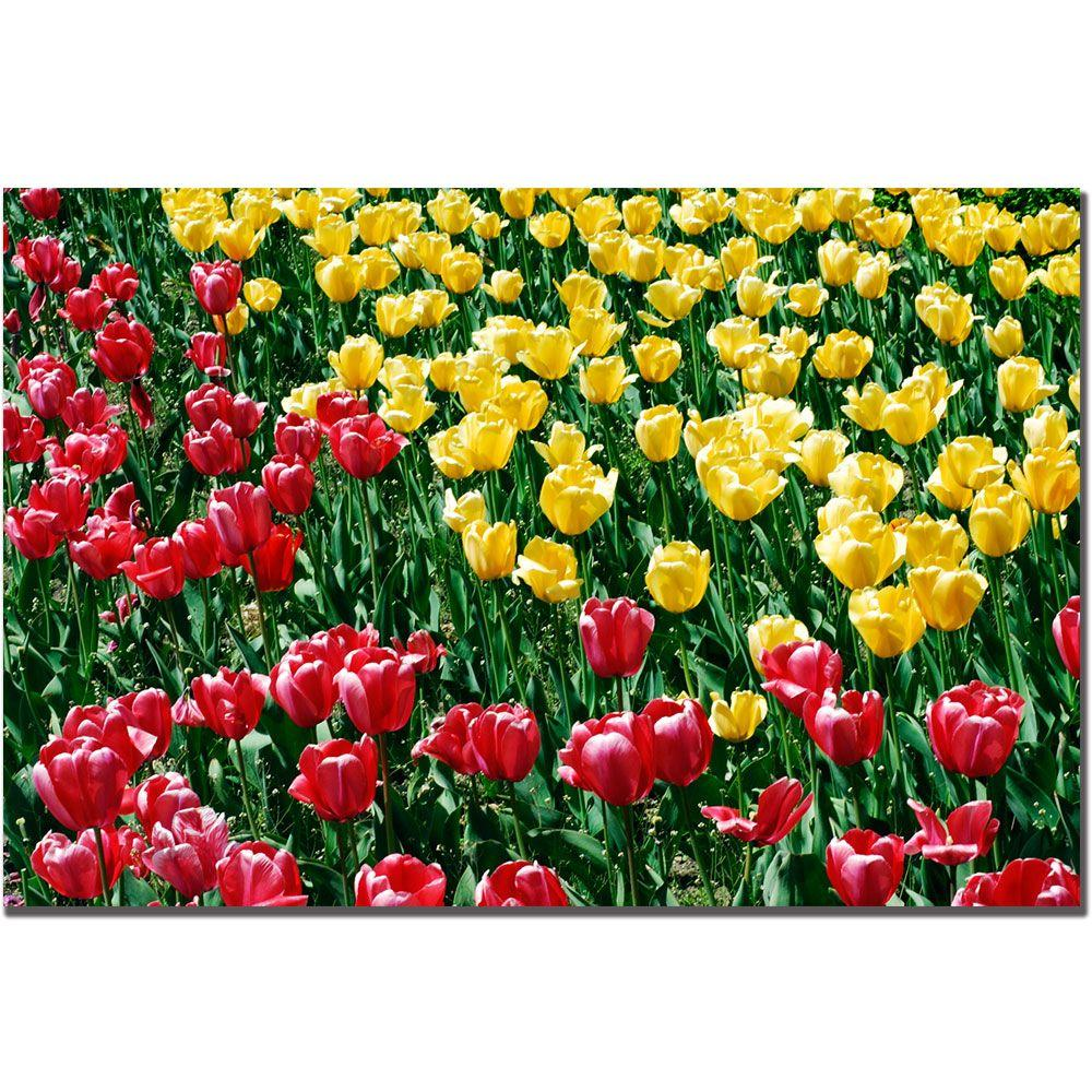 Trademark Fine Art 24 in. x 16 in. Red and Yellow Tulips II Canvas Art