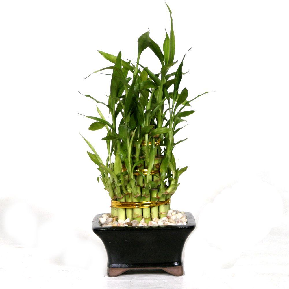 Brussel S Bonsai Pyramid Bamboo Dt 0139lbp2 The Home Depot