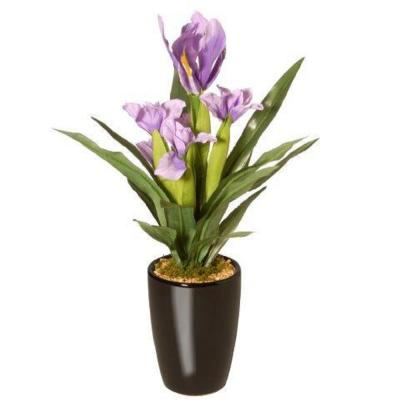 17 in. Potted Iris Plant