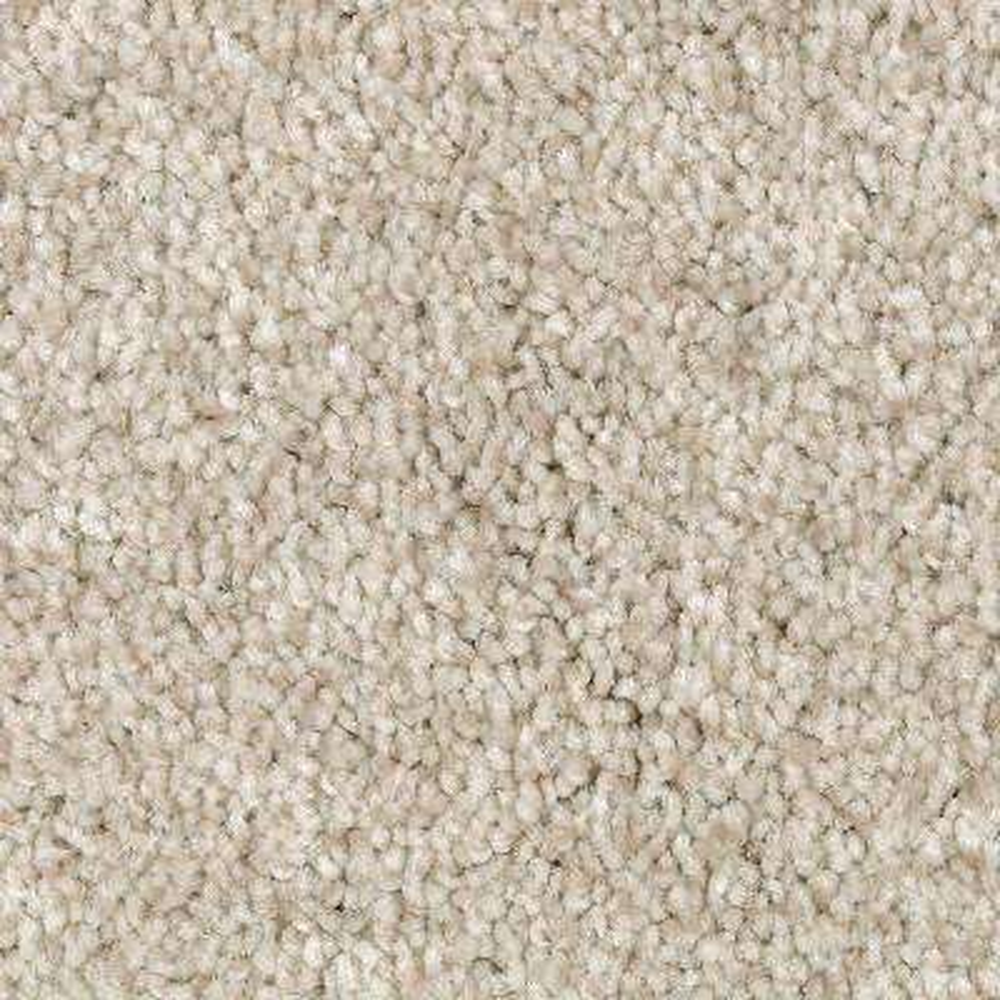 Carpet Sample - Jump Street - Color Winter Bird Texture 8 in. x 8 in.