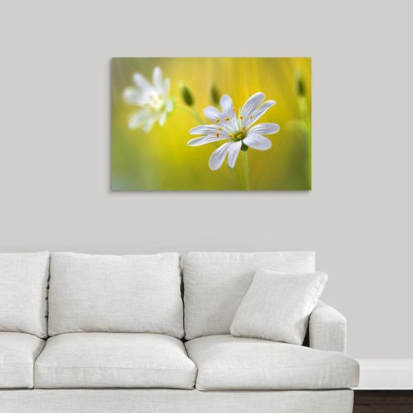 GreatBigCanvas 36 in. x 24 in. ''Stitchwort'' by Mandy Disher Canvas