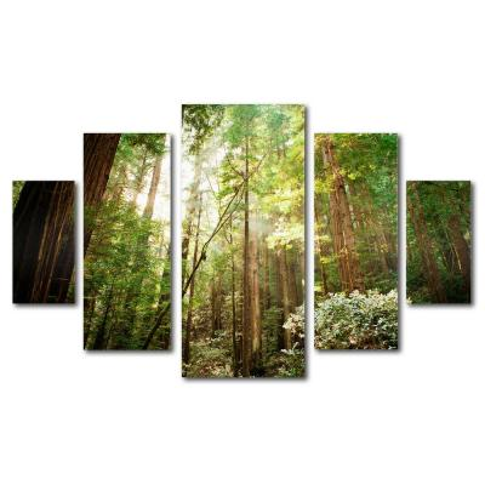 "34 in. x 44 in. ""Muir Woods"" by Ariane Moshayedi Printed Canvas Wall Art"
