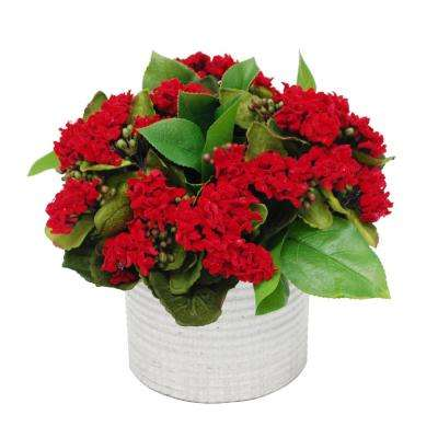 10 in. Kalanchoe in Cache Pot