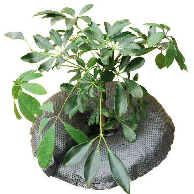 TreeDiaper 12 in. Plant Hydration Ring for Potted Plants and Seedlings (2-Pack)